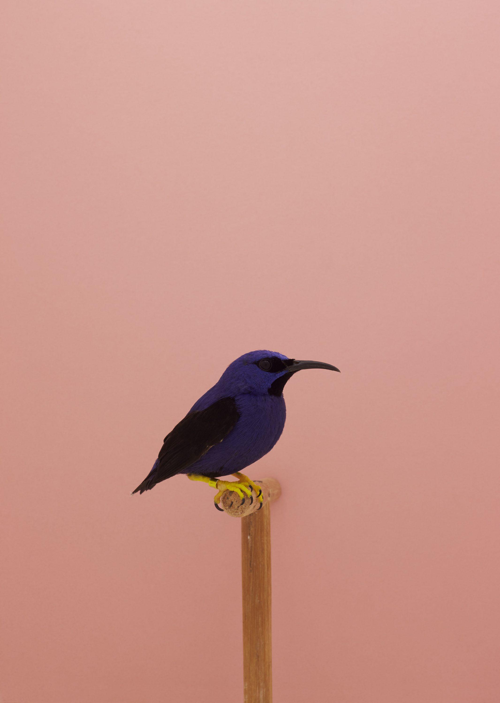 Wren-Agency-Luke-Stephenson-Showbirds-14