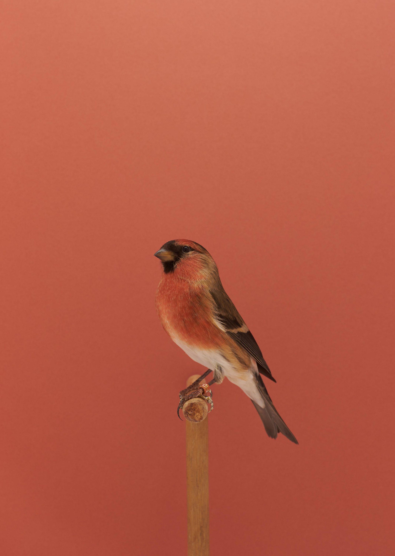 Wren-Agency-Luke-Stephenson-Showbirds-17