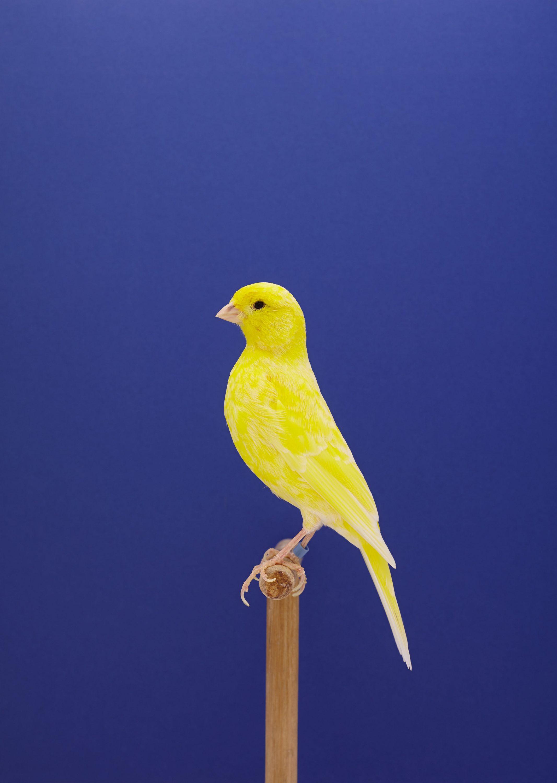 Wren-Agency-Luke-Stephenson-Showbirds-2