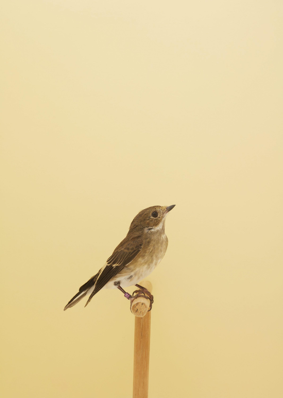 Wren-Agency-Luke-Stephenson-Showbirds-22