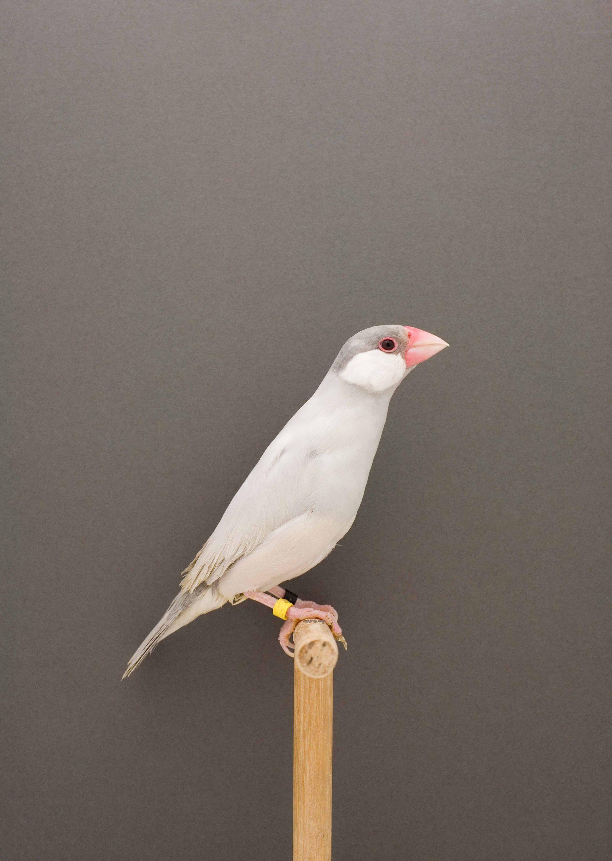 Wren-Agency-Luke-Stephenson-Showbirds-6
