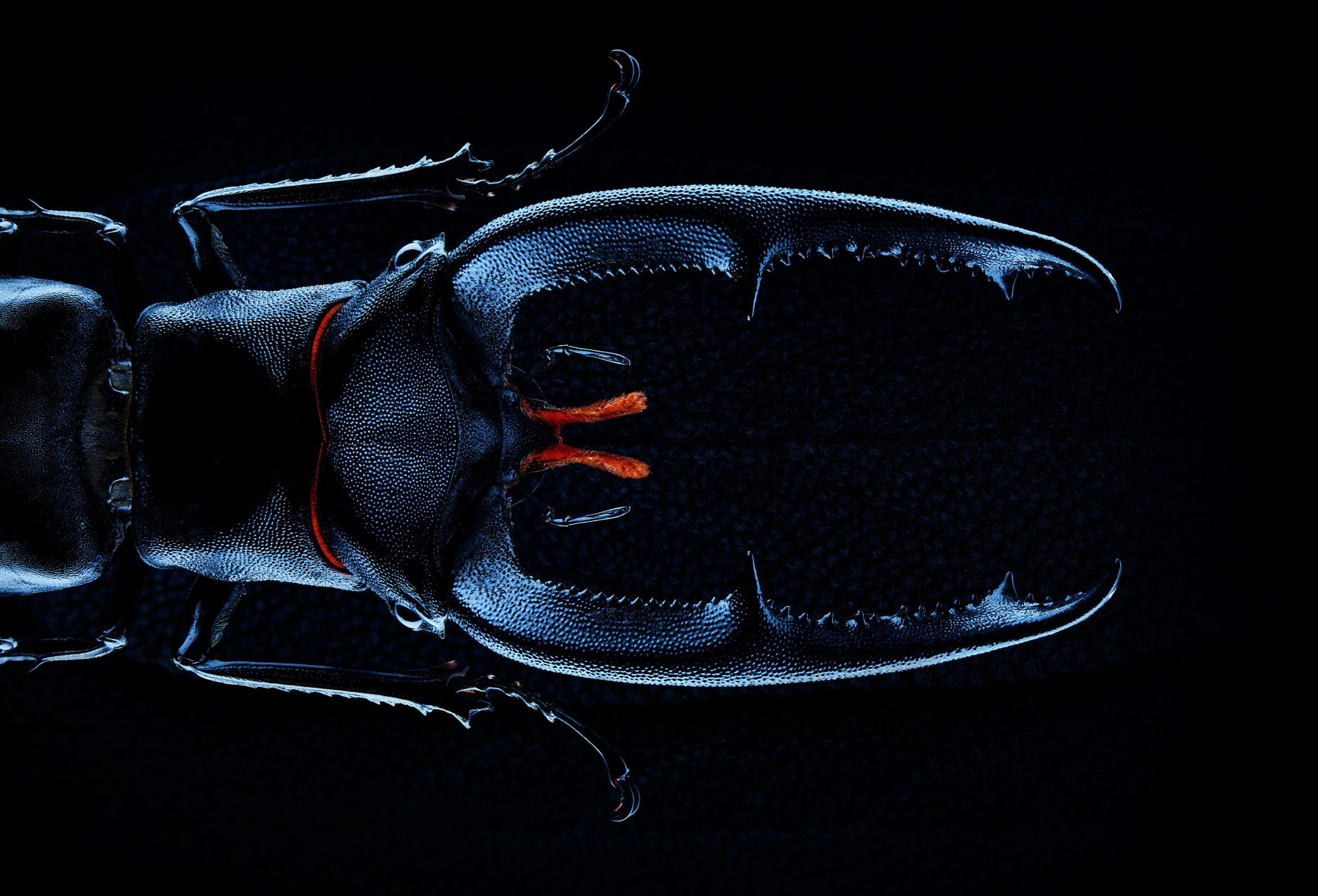 Wren-Agency-Richard-Foster-Beetle 1