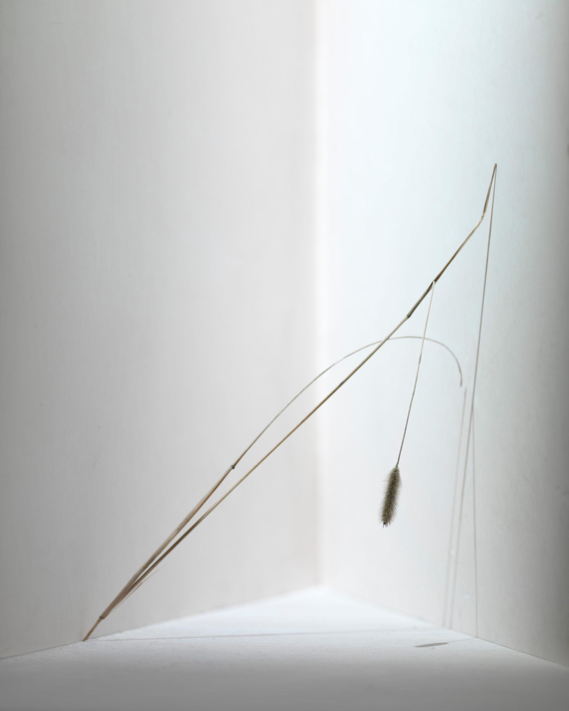 Wren-Agency-Richard-Foster-Rakes Progress-2