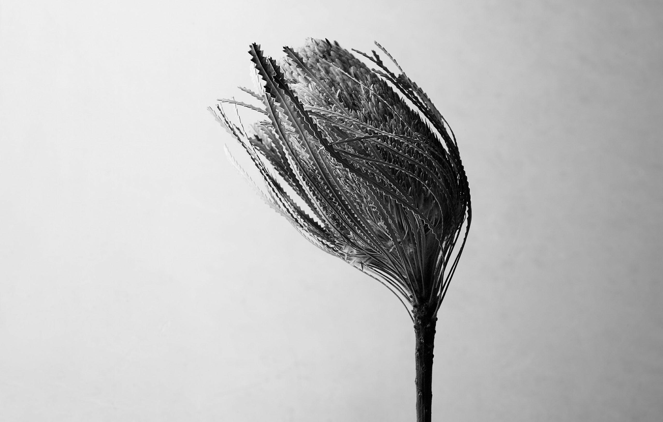 rf4159_ILA_Spa_S09_wind