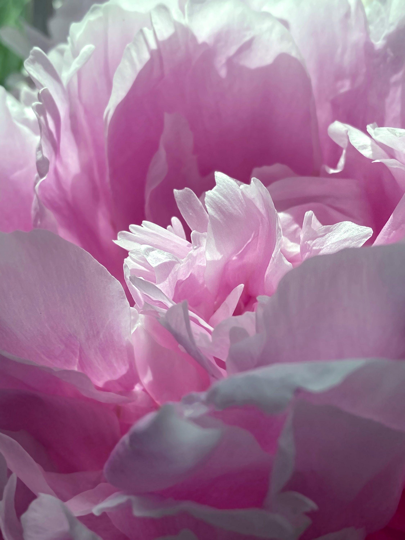 RF_Florals0001