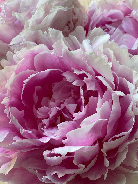 RF_Florals0002