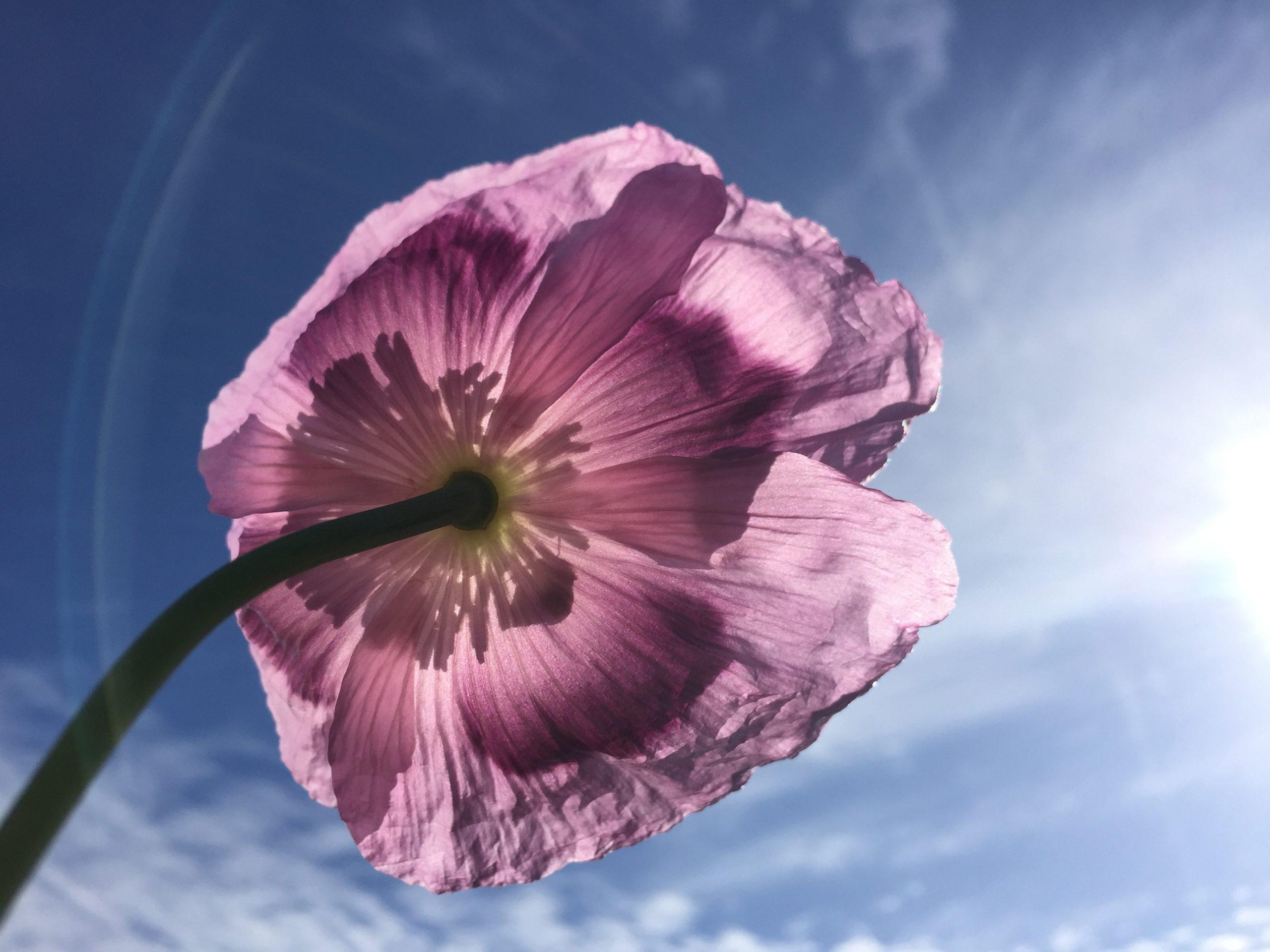 RF_Florals0003