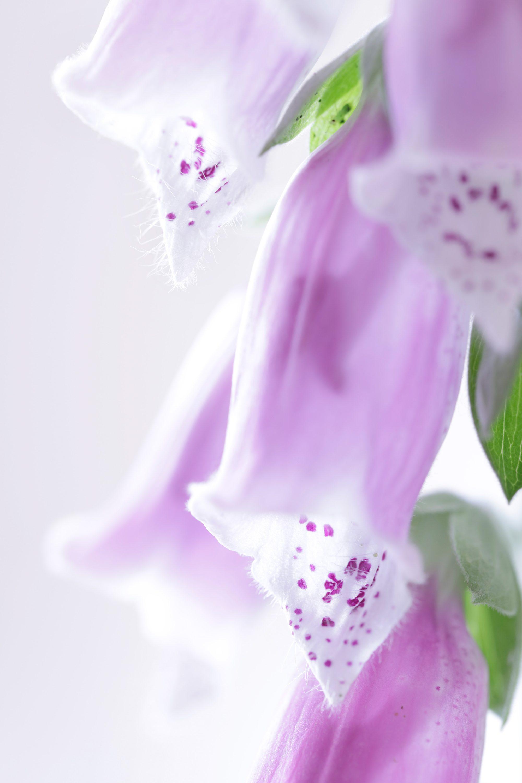 RF_Florals0005