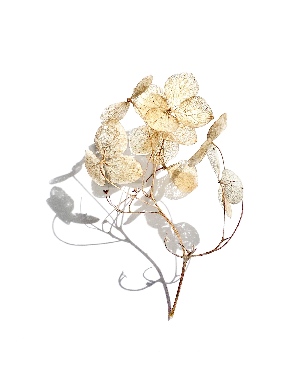 RF_Florals0007