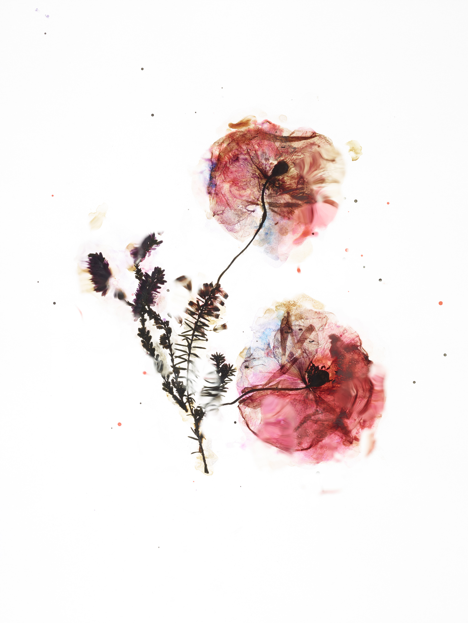 rf4201_dried_flower_test_s02_065