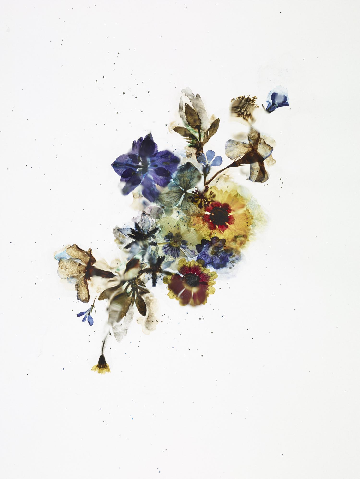 rf4201_dried_flower_test_s04_026