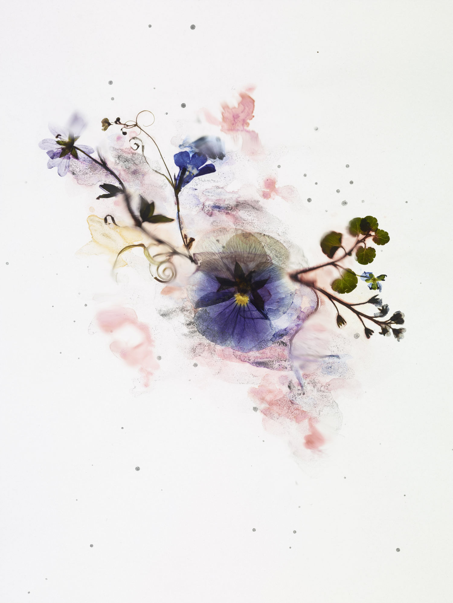 rf4201_dried_flower_test_s05_027