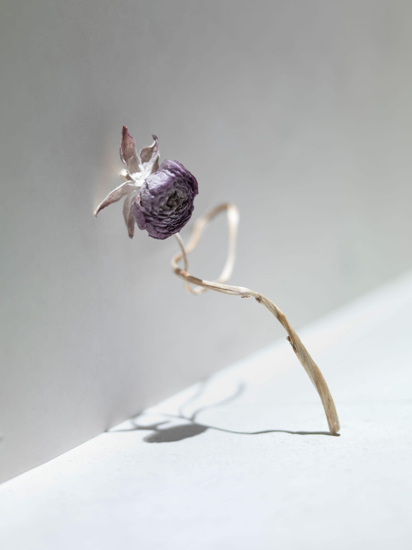 wren-agency-richard-foster-dry-flowers-1